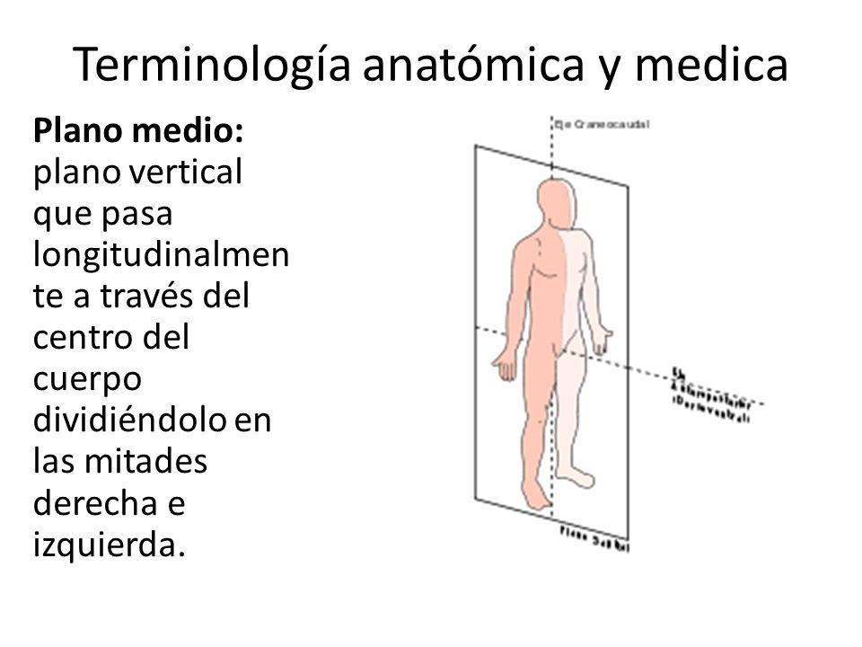 Terminología anatómica y medica