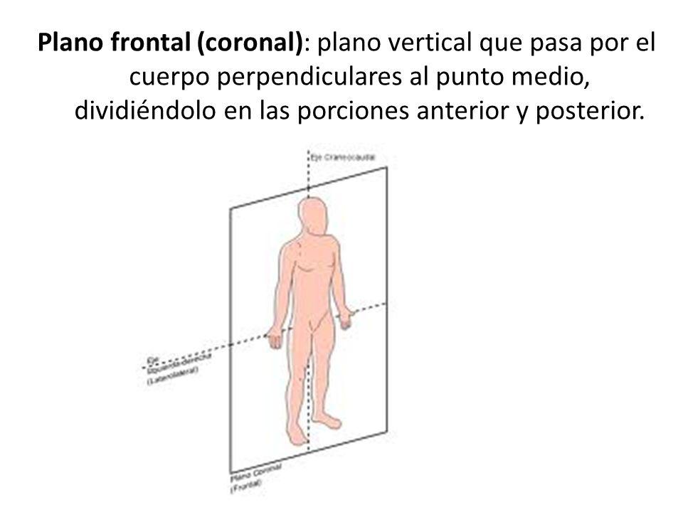 Increíble Plano Sagital Definición Anatomía Molde - Anatomía de Las ...