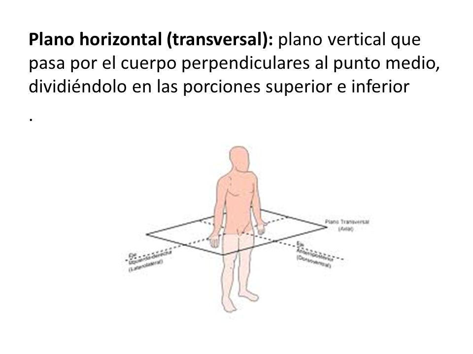 Plano horizontal (transversal): plano vertical que pasa por el cuerpo perpendiculares al punto medio, dividiéndolo en las porciones superior e inferior