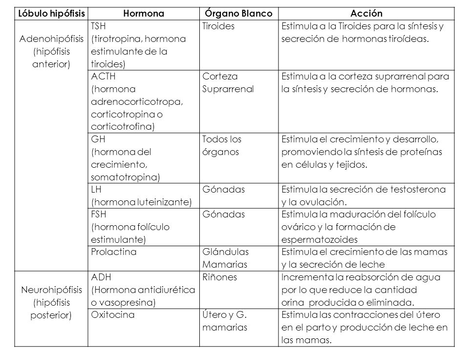 Lóbulo hipófisis Hormona Órgano Blanco Acción