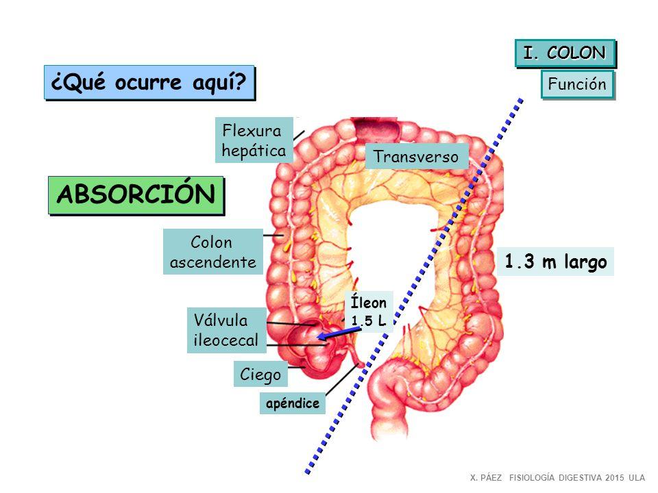 Excepcional Anatomía De La Válvula Ileocecal Ideas - Imágenes de ...