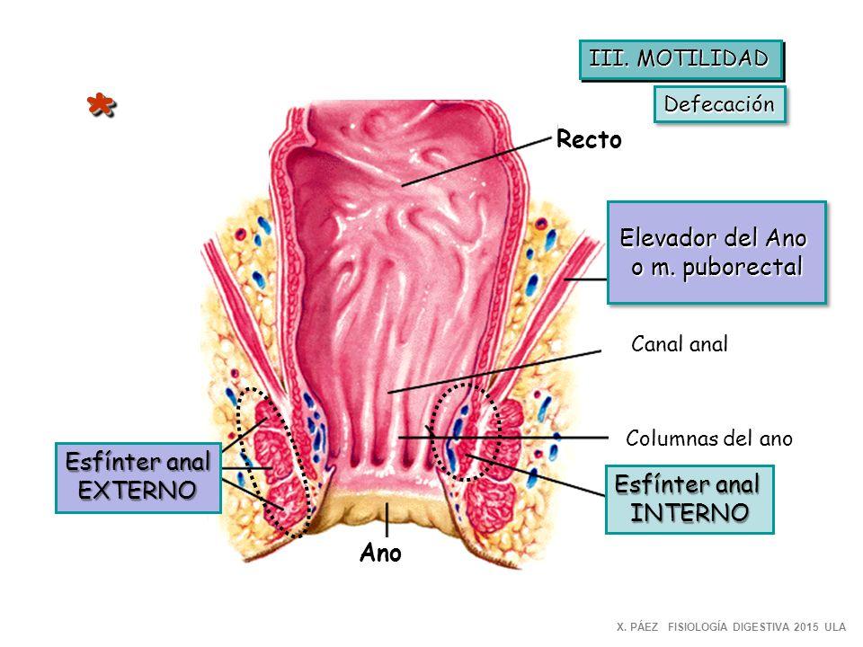 Lujoso Imágenes Ano Anatomía Imagen - Anatomía de Las Imágenesdel ...