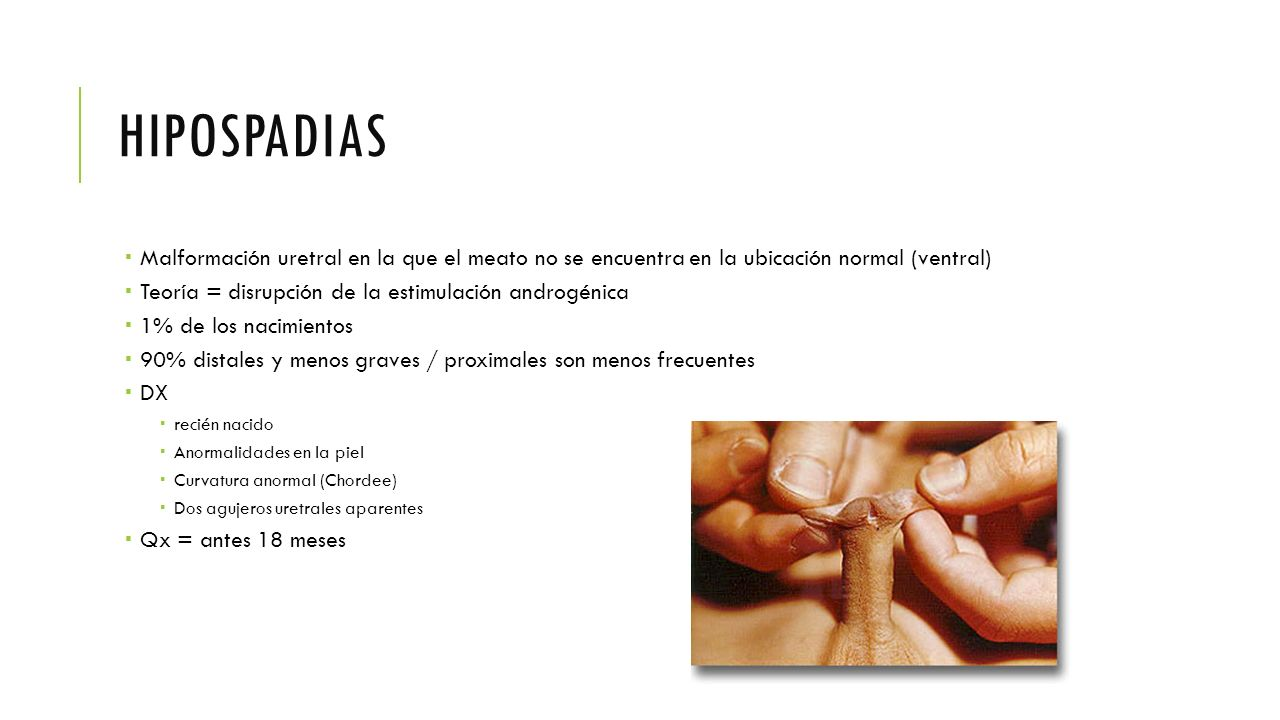 Moderno Agujeros De La Anatomía Humana Y Fisiología Novena Edición ...
