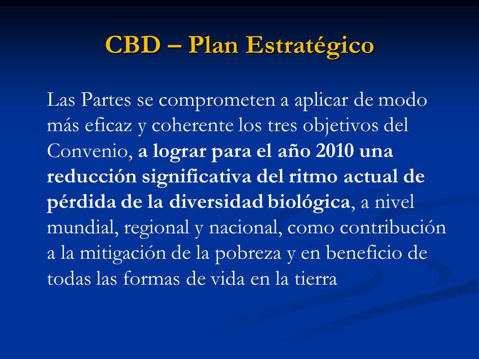 CBD – Plan Estratégico