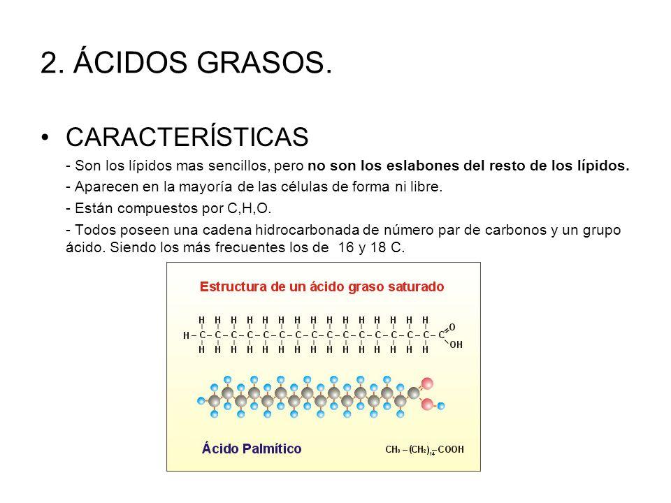 terpenos y esteroides ppt