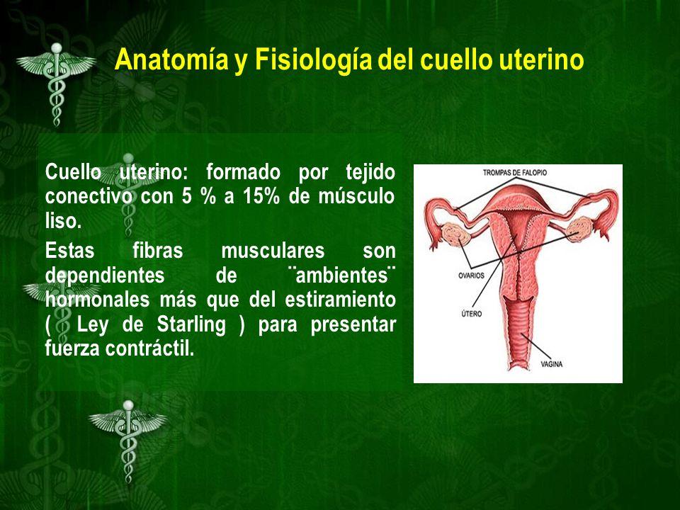Hermosa Anatomía Y Fisiología Del Cuello Uterino Modelo - Imágenes ...