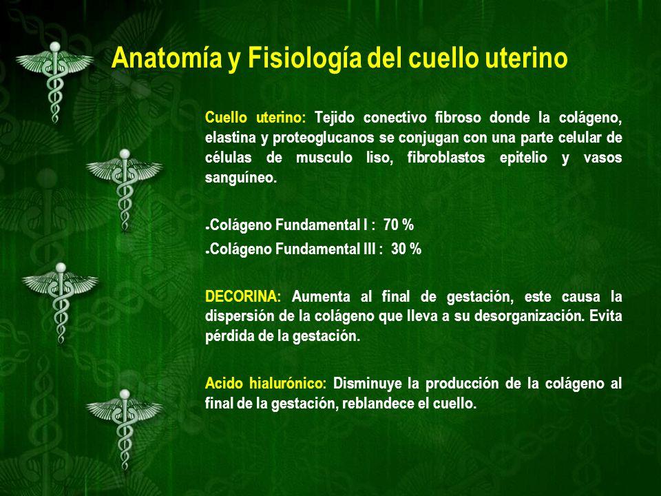 Moderno Anatomía Y Fisiología Del Cuello Uterino Ornamento ...