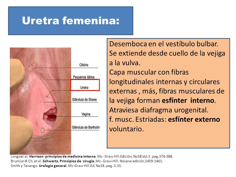 Encantador Anatomía De La Vejiga Y De La Uretra Femenina ...
