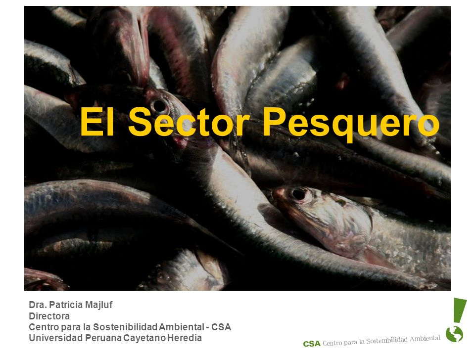 El Sector Pesquero Dra. Patricia Majluf Directora