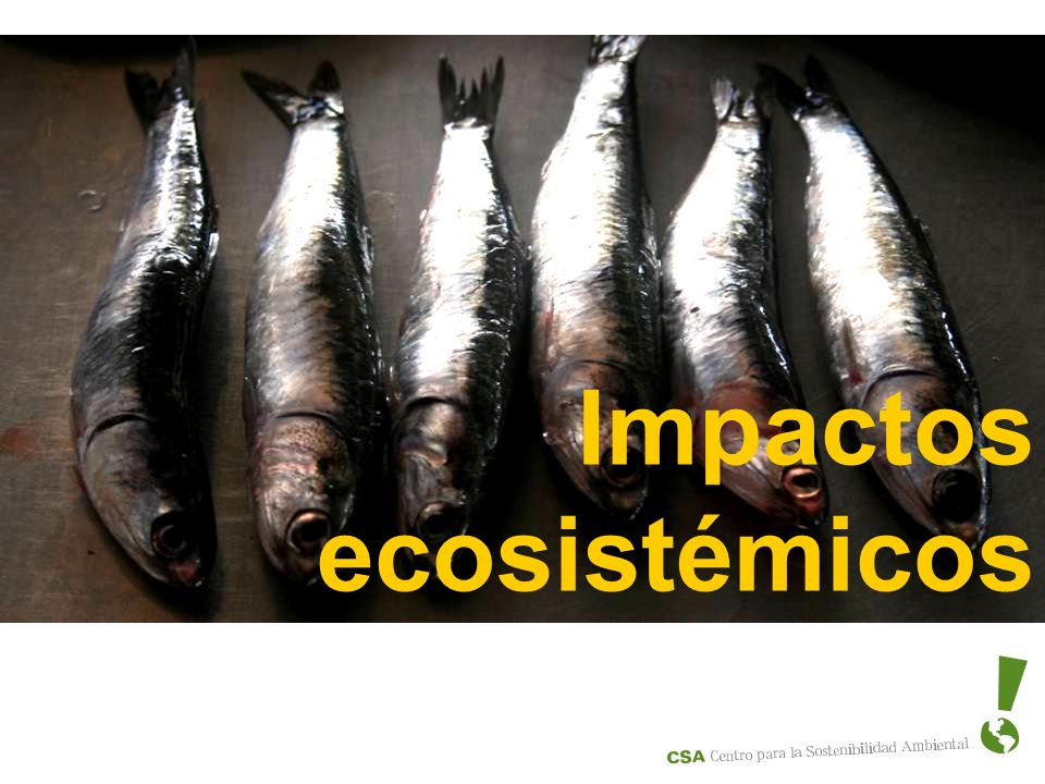 Impactos ecosistémicos