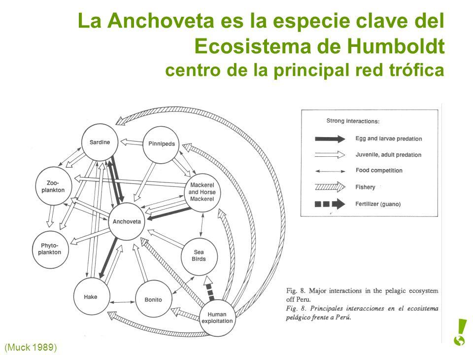 La Anchoveta es la especie clave del Ecosistema de Humboldt centro de la principal red trófica