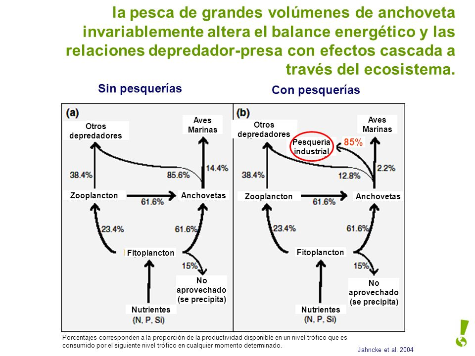 la pesca de grandes volúmenes de anchoveta invariablemente altera el balance energético y las relaciones depredador-presa con efectos cascada a través del ecosistema.