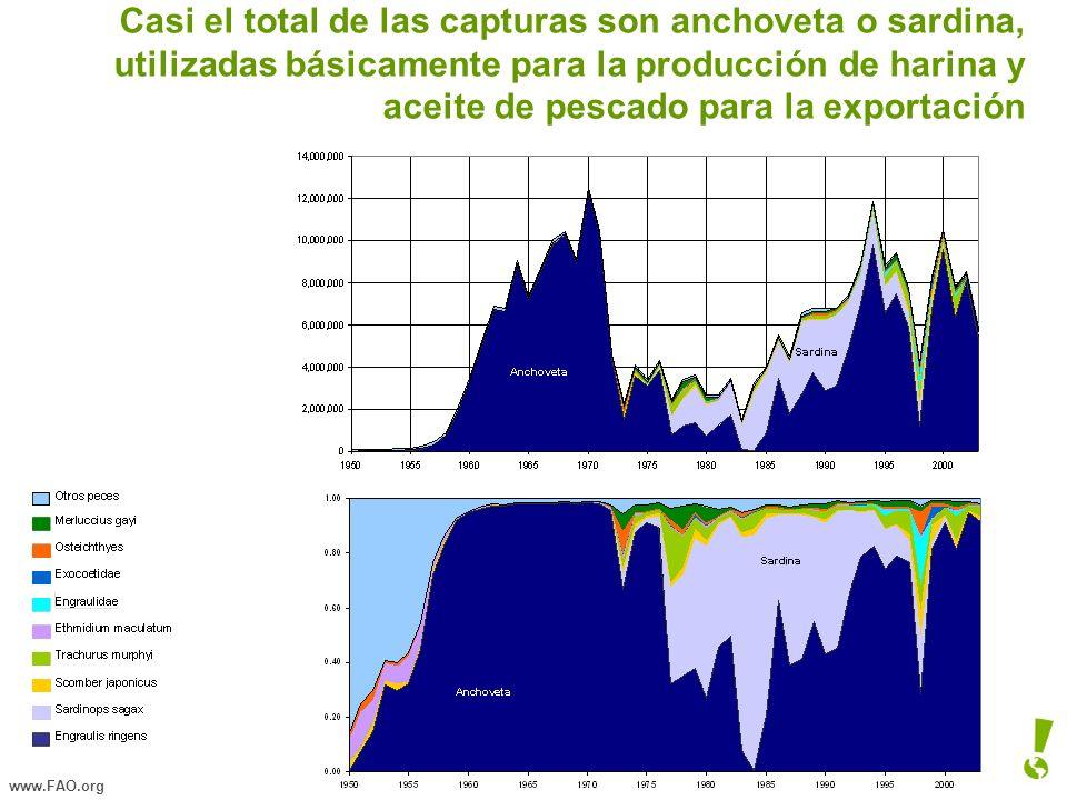Casi el total de las capturas son anchoveta o sardina, utilizadas básicamente para la producción de harina y aceite de pescado para la exportación