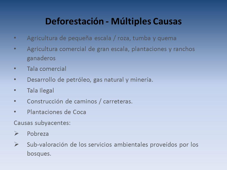 Deforestación - Múltiples Causas