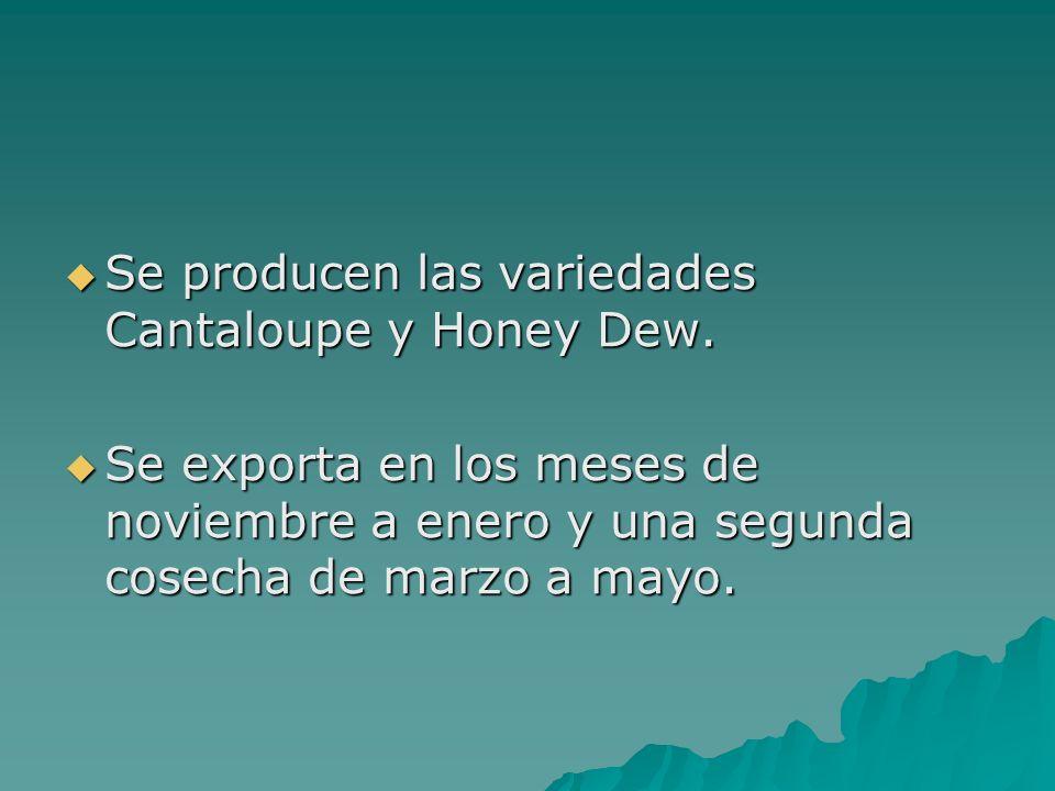 Se producen las variedades Cantaloupe y Honey Dew.