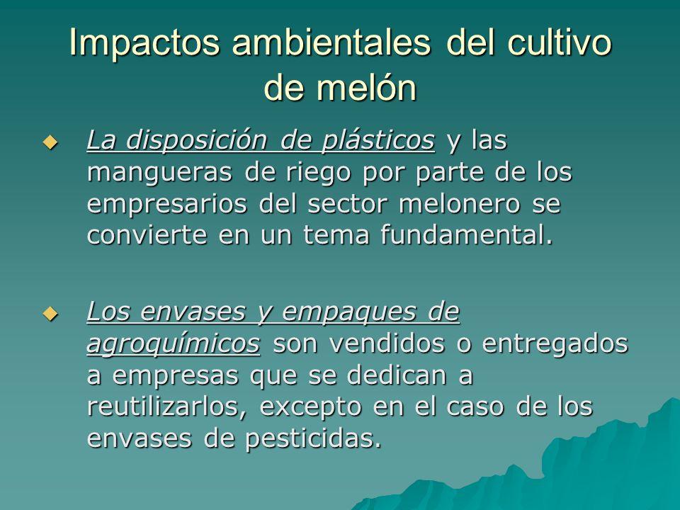Impactos ambientales del cultivo de melón