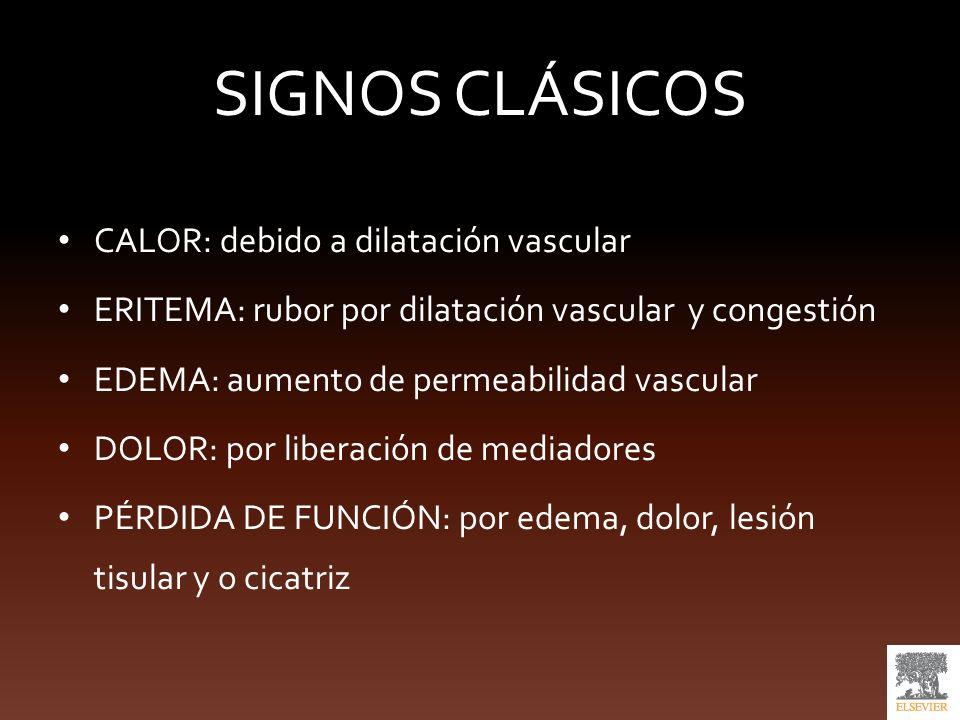 SIGNOS CLÁSICOS CALOR: debido a dilatación vascular
