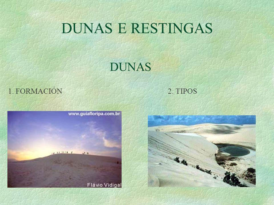 DUNAS E RESTINGAS DUNAS. 1. FORMACIÓN 2.
