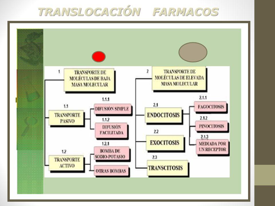 TRANSLOCACIÓN FARMACOS