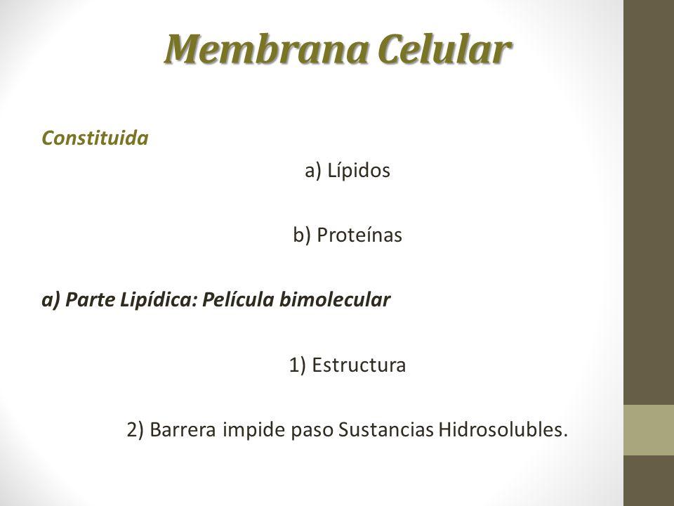 2) Barrera impide paso Sustancias Hidrosolubles.