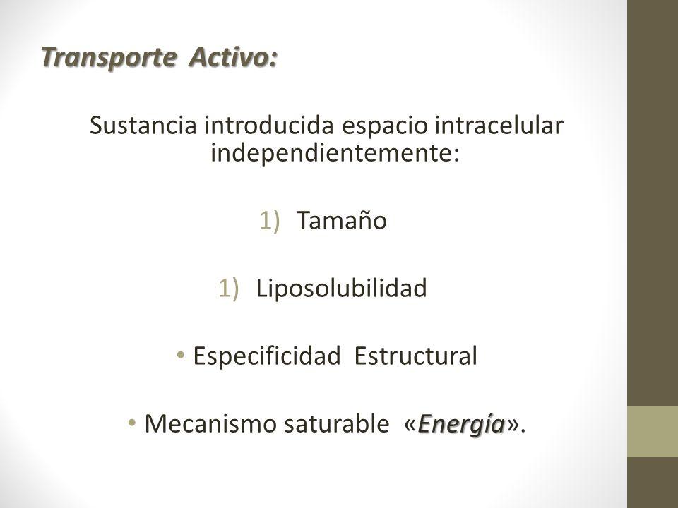 Transporte Activo: Sustancia introducida espacio intracelular independientemente: Tamaño. Liposolubilidad.
