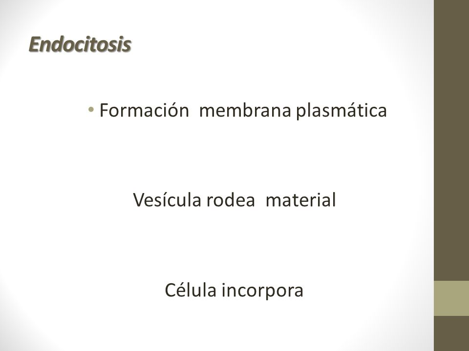 Endocitosis Formación membrana plasmática Vesícula rodea material
