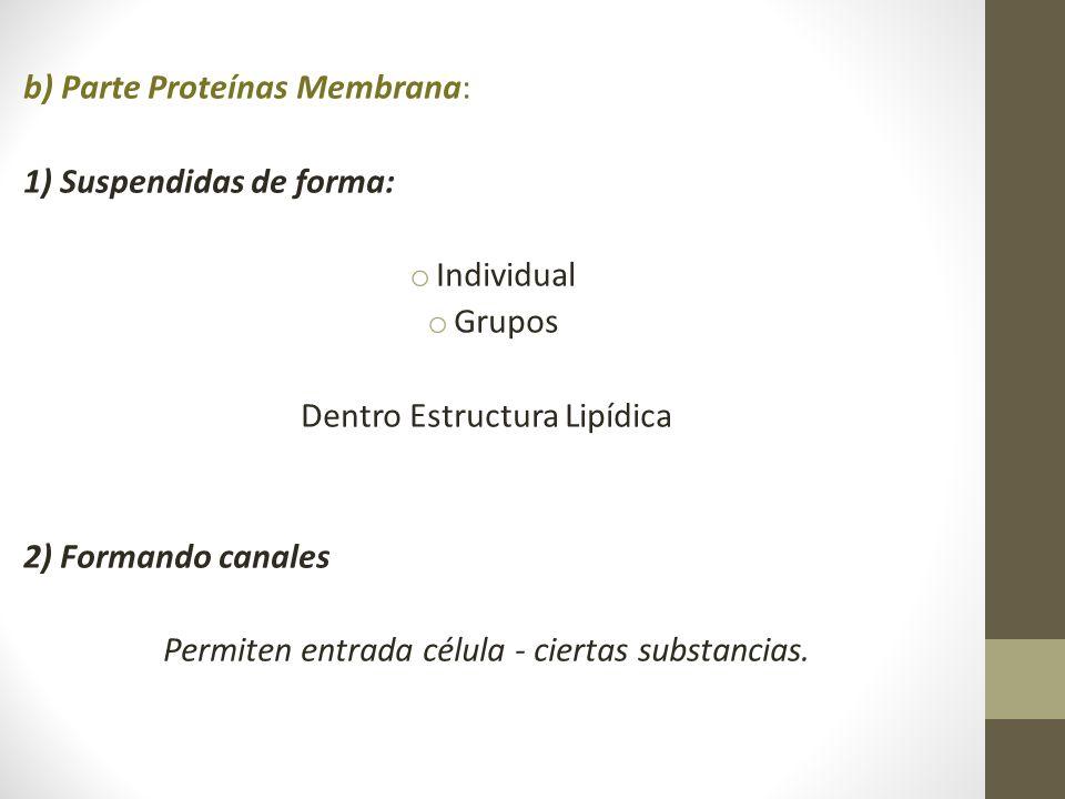 b) Parte Proteínas Membrana: 1) Suspendidas de forma: Individual