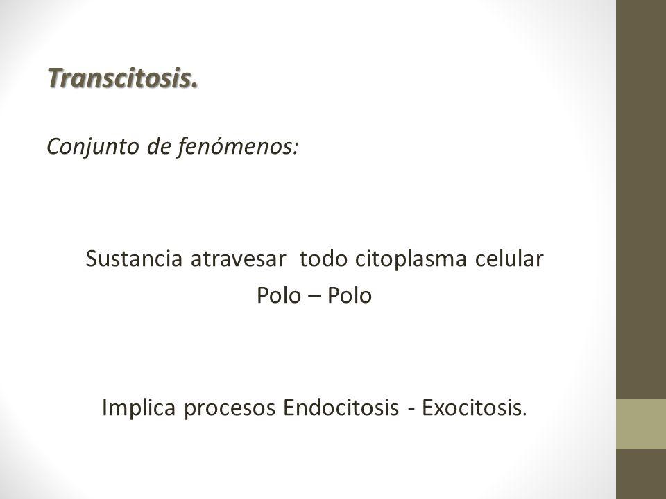 Transcitosis. Conjunto de fenómenos: