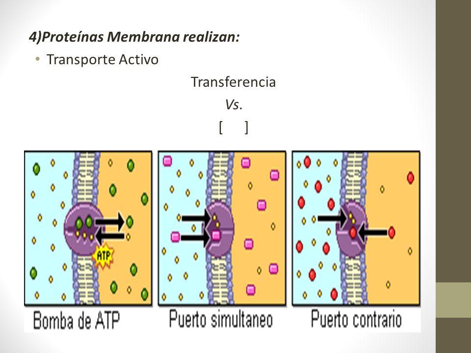 4)Proteínas Membrana realizan: