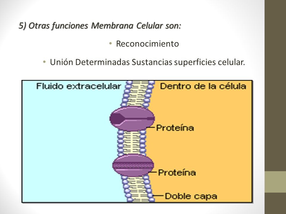 Unión Determinadas Sustancias superficies celular.