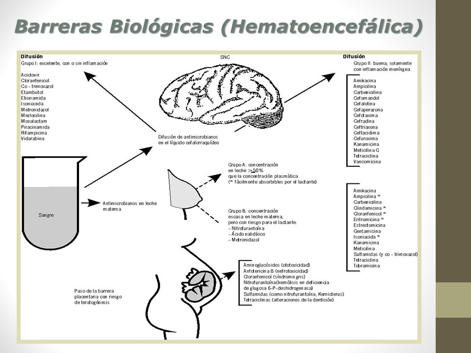Barreras Biológicas (Hematoencefálica)