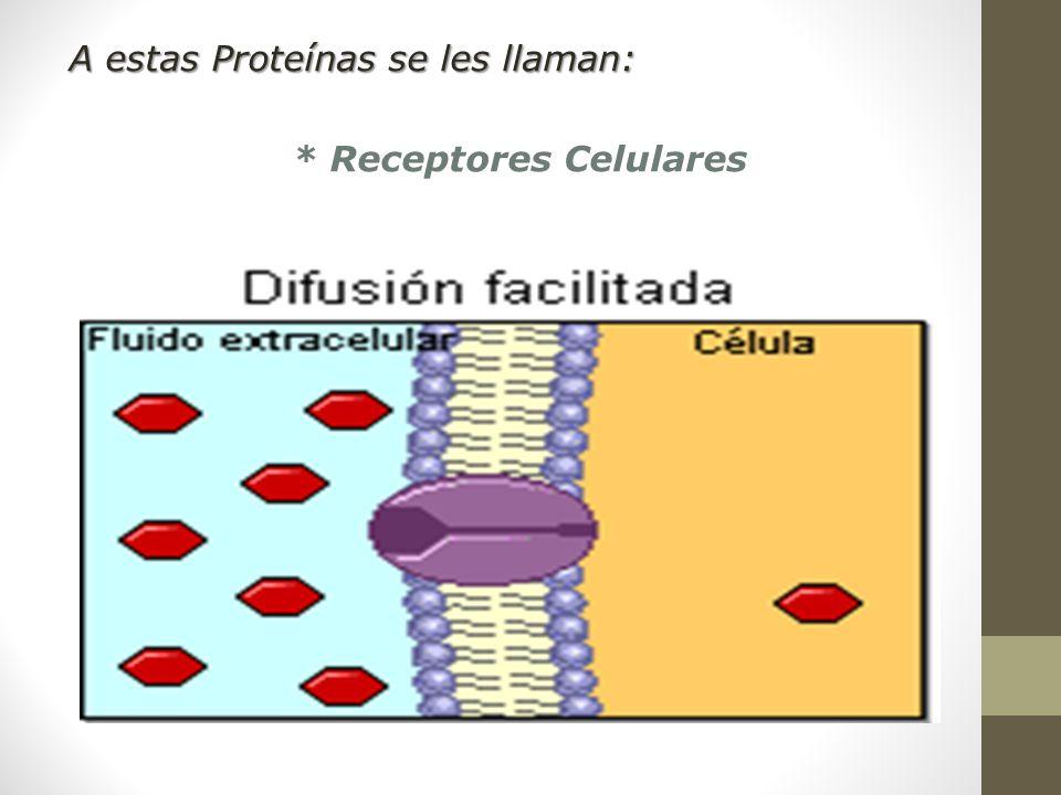 * Receptores Celulares