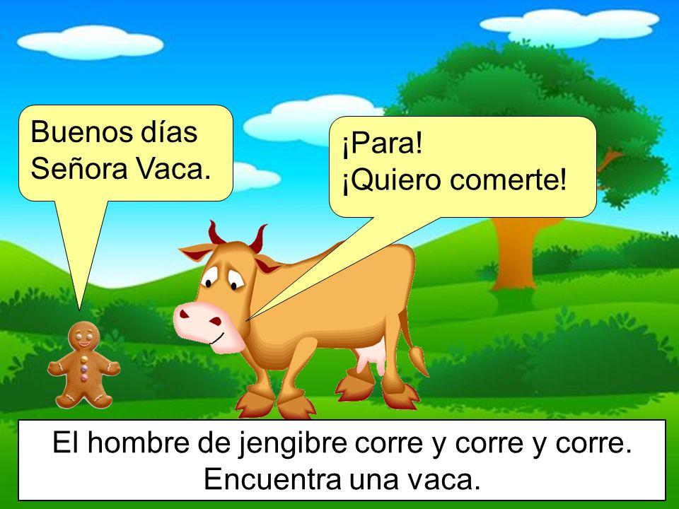 El hombre de jengibre corre y corre y corre. Encuentra una vaca.