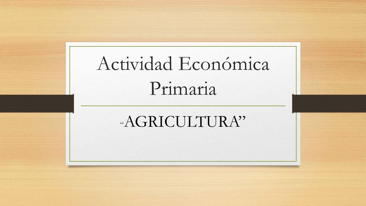Actividad Económica Primaria