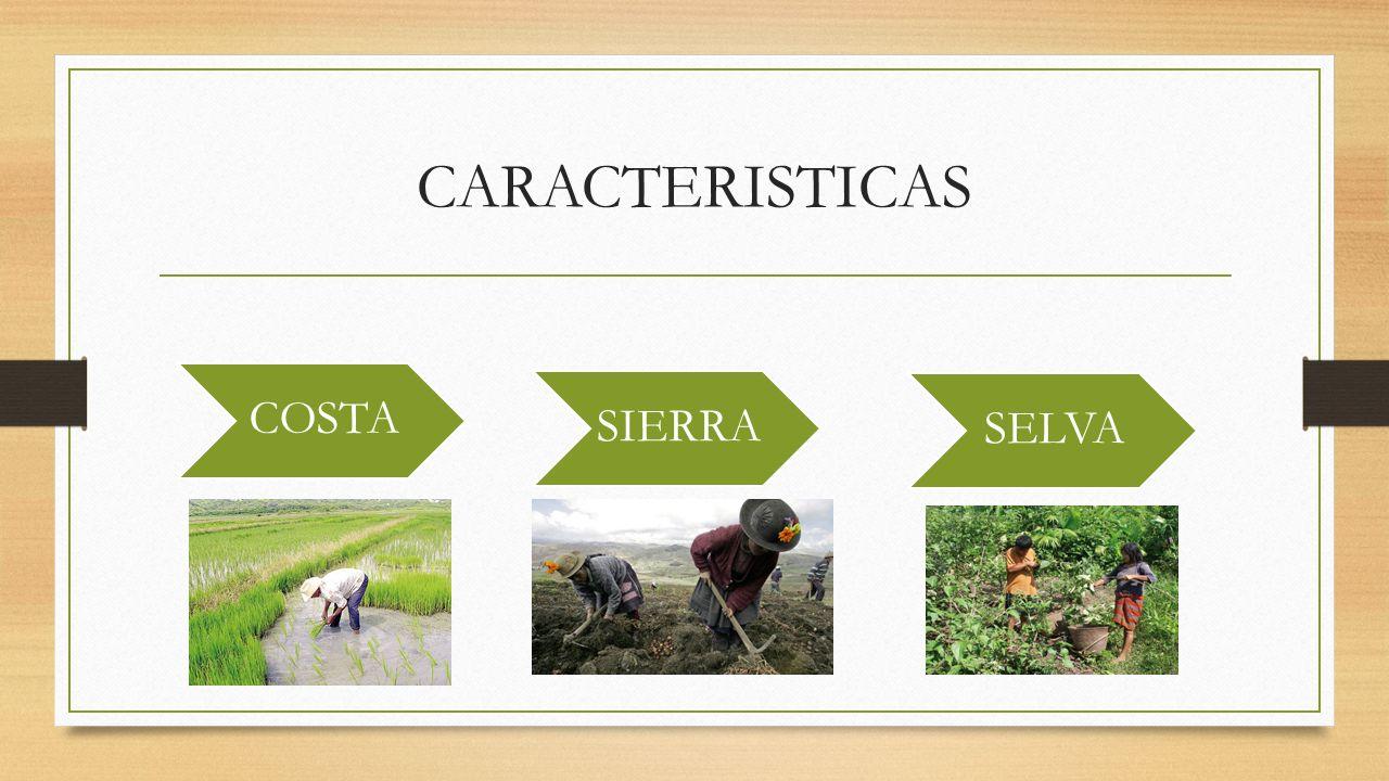 CARACTERISTICAS COSTA SIERRA SELVA