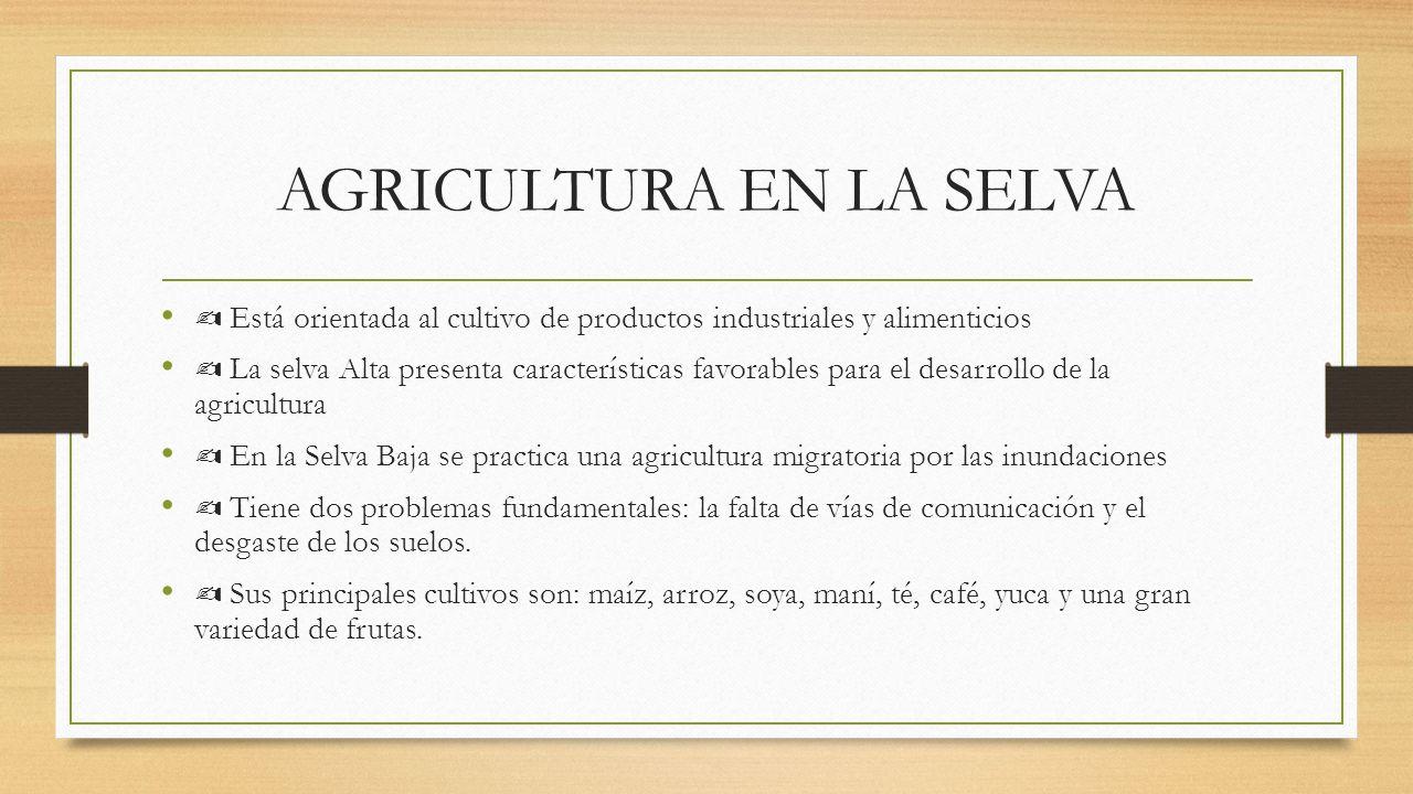 AGRICULTURA EN LA SELVA