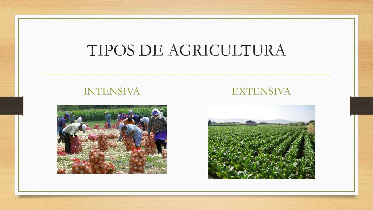 TIPOS DE AGRICULTURA INTENSIVA EXTENSIVA