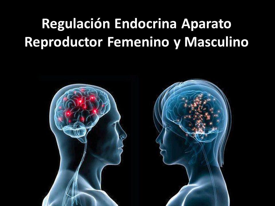 Regulación Endocrina Aparato Reproductor Femenino y Masculino - ppt ...