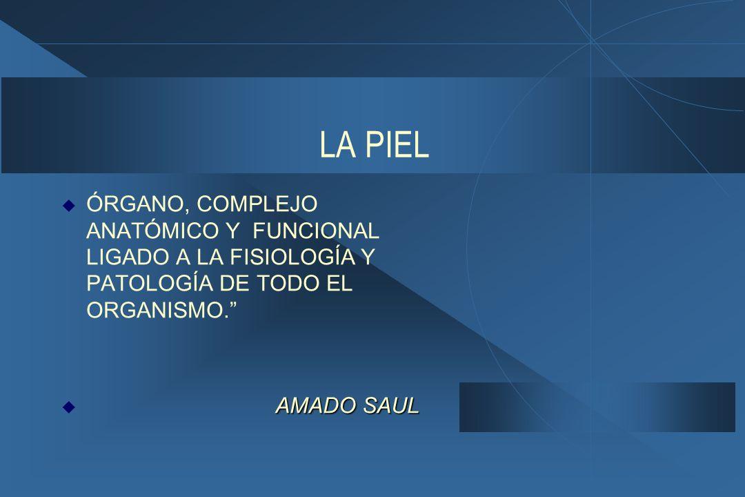 LA PIEL ÓRGANO, COMPLEJO ANATÓMICO Y FUNCIONAL LIGADO A LA FISIOLOGÍA Y PATOLOGÍA DE TODO EL ORGANISMO.
