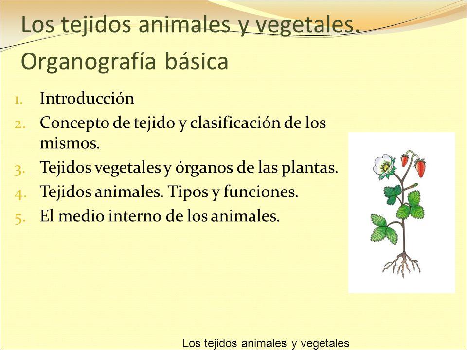 Los Tejidos Animales Y Vegetales Organografía Básica