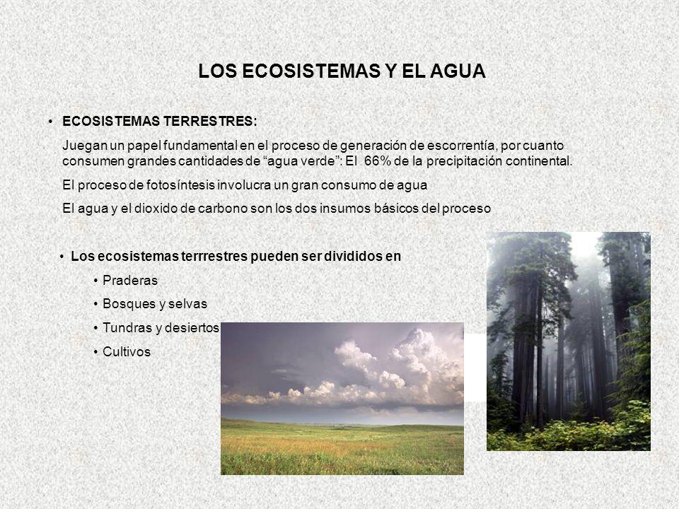 LOS ECOSISTEMAS Y EL AGUA