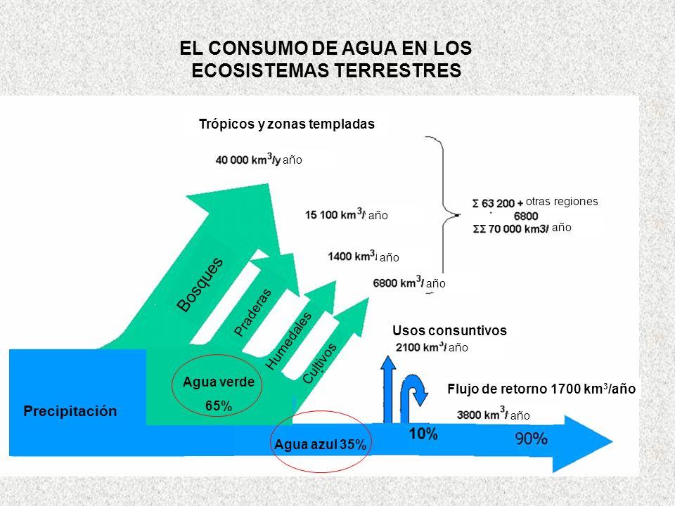 EL CONSUMO DE AGUA EN LOS ECOSISTEMAS TERRESTRES