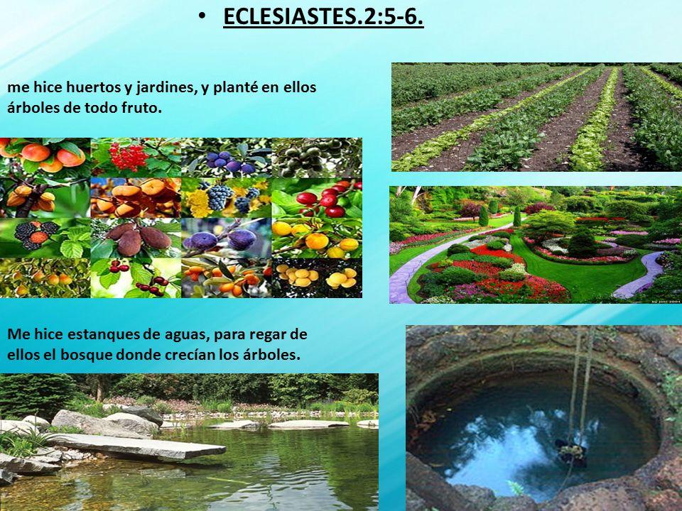 Tema la verdadera felicidad texto eclesiaste 2 ppt for Todo para estanques