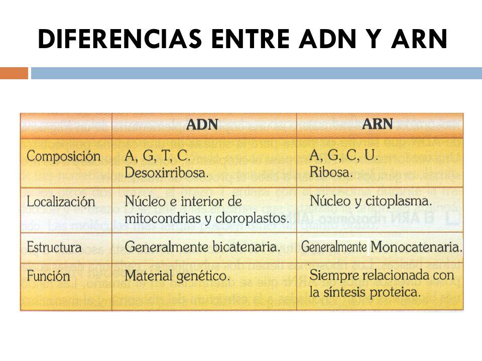 TEMA 6. Los ácidos Nucleicos