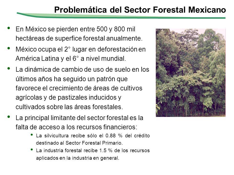 Problemática del Sector Forestal Mexicano