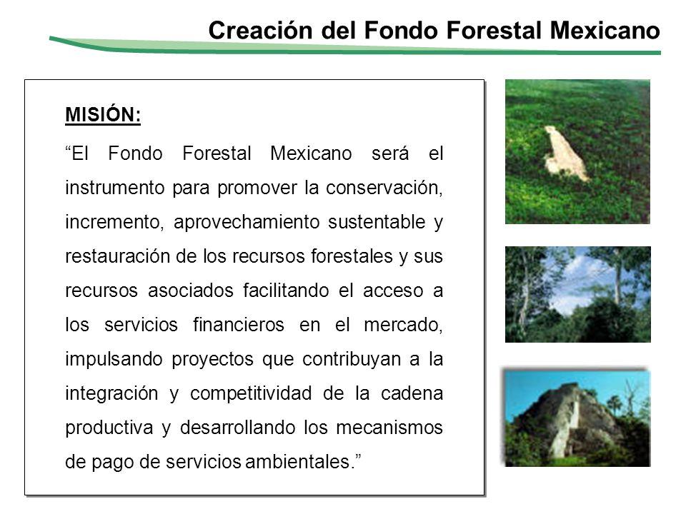 Creación del Fondo Forestal Mexicano