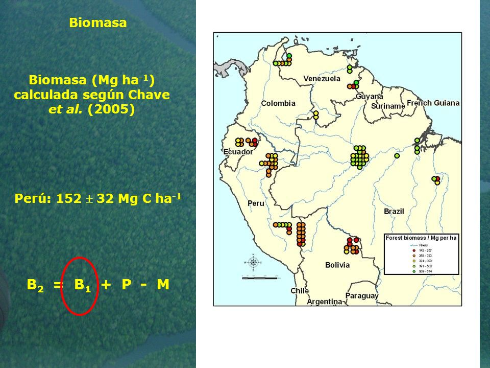 Biomasa (Mg ha-1) calculada según Chave et al. (2005)