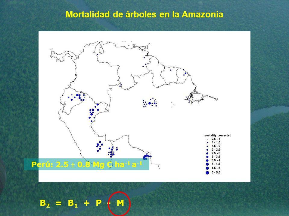 Mortalidad de árboles en la Amazonia