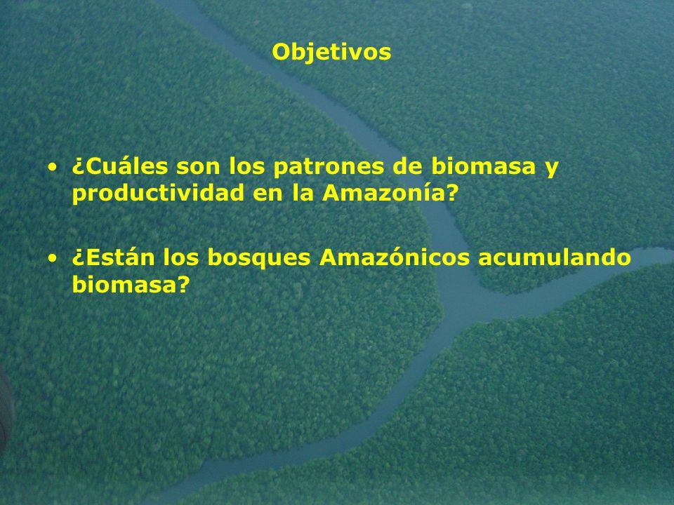 ¿Cuáles son los patrones de biomasa y productividad en la Amazonía