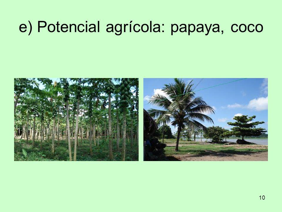 e) Potencial agrícola: papaya, coco
